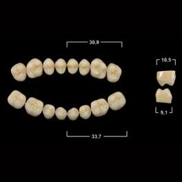 Акриловые зубы Tribos 501, жевательный низ - PS
