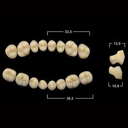 Акриловые зубы Tribos 501, жевательный верх - SM