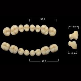 Акриловые зубы Tribos 501, жевательный низ - SM