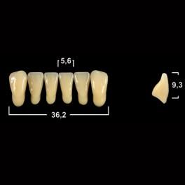 Акриловые зубы Tribos 501, фронт, низ - L7
