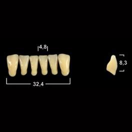 Акриловые зубы Tribos 501, фронт, низ - L3