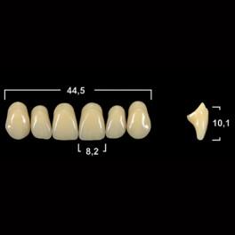 Акриловые зубы Tribos 501, фронт, верх - Т66
