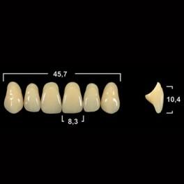 Акриловые зубы Tribos 501, фронт, верх - Т76