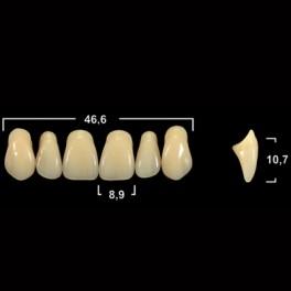Акриловые зубы Tribos 501, фронт, верх - R14