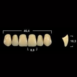 Акриловые зубы Tribos 501, фронт, верх - R66