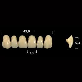 Акриловые зубы Tribos 501, фронт, верх - O31