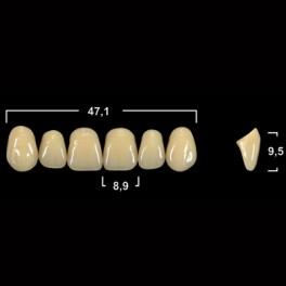 Акриловые зубы Tribos 501, фронт, верх - O54