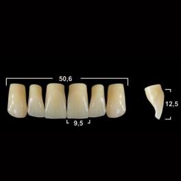 Акриловые зубы Tribos 501, фронт, верх - VR43