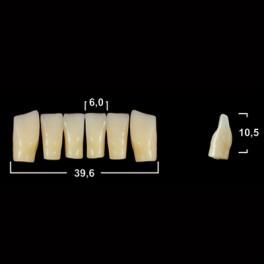 Акриловые зубы Tribos 501, фронт, низ - LV6