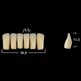 Акриловые зубы Tribos 501, фронт, низ - LV2