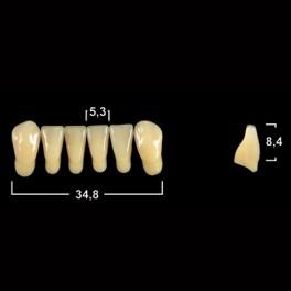 Акриловые зубы Tribos 501, фронт, низ - L5