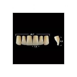 Акриловые зубы Tribos 501, фронт, верх - VR11