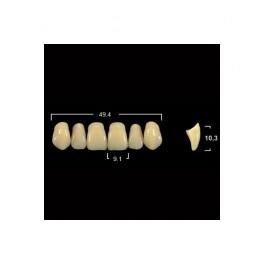 Акриловые зубы Tribos 501, фронт, верх - VR66