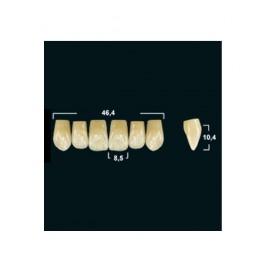Акриловые зубы Tribos 501, фронт, верх - VT76