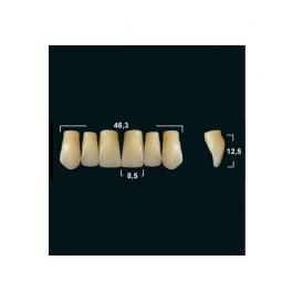 Акриловые зубы Tribos 501, фронт, верх - VT22