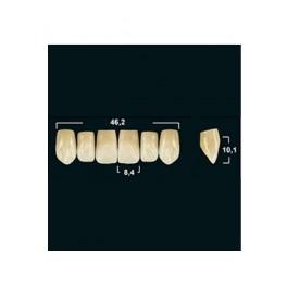 Акриловые зубы Tribos 501, фронт, верх - VR65
